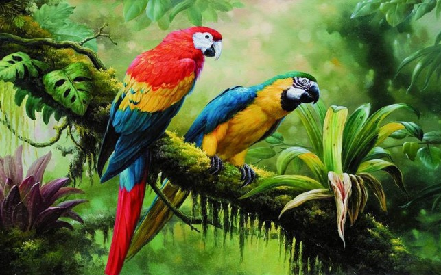 Lovely Parrots Branch Tropics wallpapers and stock photos