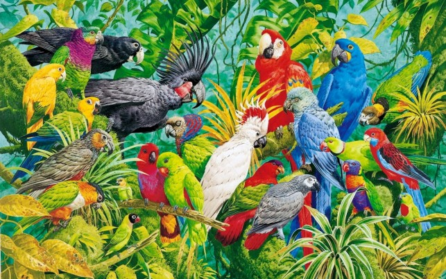 Parrots Paradise wallpapers and stock photos