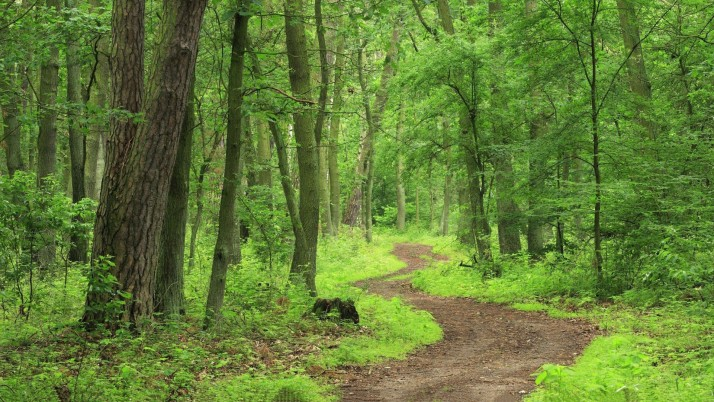 Fresh Green Forest Small Way wallpapers and stock photos