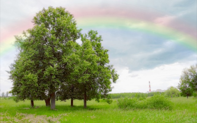 Lovely Trees Pasture Rainbow wallpapers and stock photos