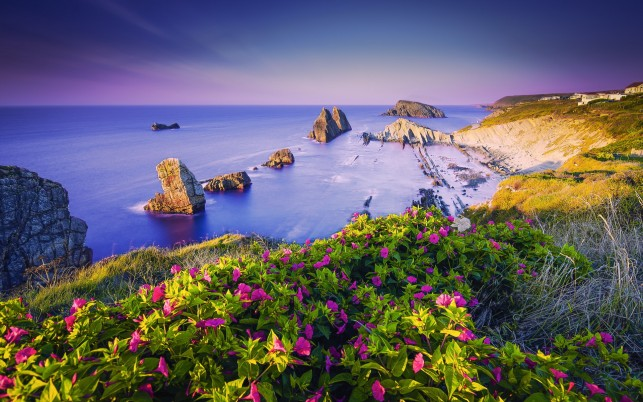 Ocean Rocks Lilac Flowers Hill wallpapers and stock photos