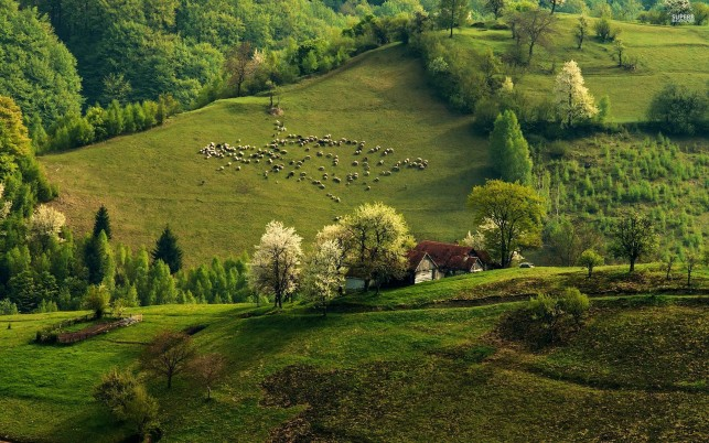 Green Hills Sheeps Trees House wallpapers and stock photos