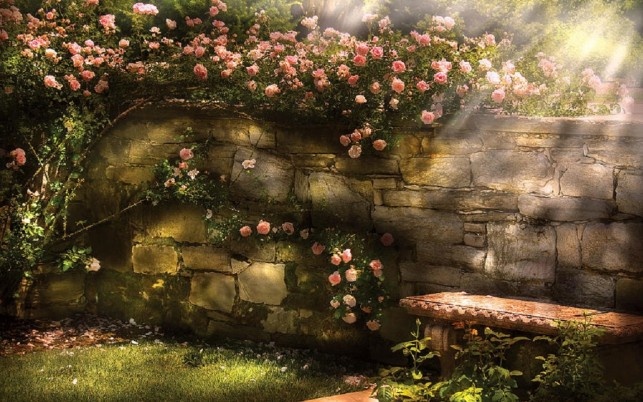 Climbing Rose Wall Bench Sunny wallpapers and stock photos