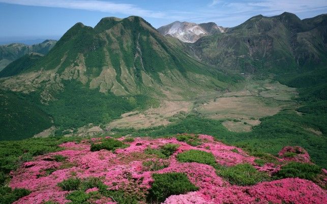 Green Peaks & Pink Blossoms wallpapers and stock photos
