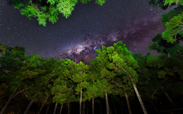 Grass Green Trees Milky Way wallpapers and stock photos