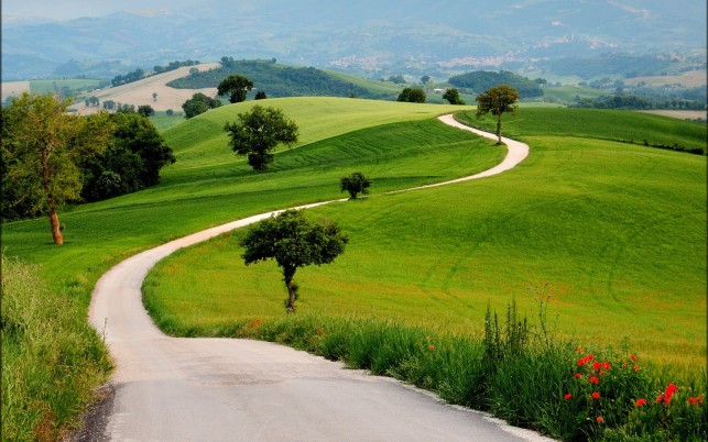 Charming Green Hills Way Trees wallpapers and stock photos