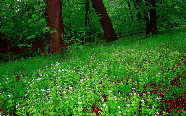 Bright Forest & White Flowers wallpapers and stock photos