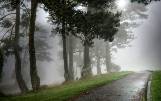 Nice Trees Hill Road Foggy wallpapers and stock photos