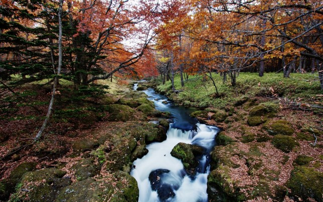 Lovely Creek Calico Trees Rock wallpapers and stock photos