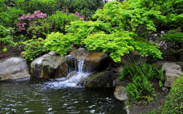 Bright Plants Water Rocks Park wallpapers and stock photos