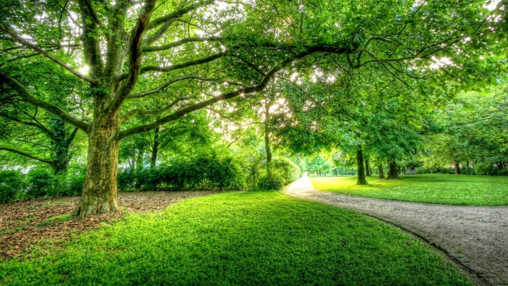 Bright Trees Path Sunny Park wallpapers and stock photos