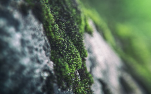 Moss Macro wallpapers and stock photos