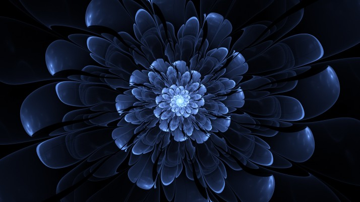 Blue Flower wallpapers and stock photos