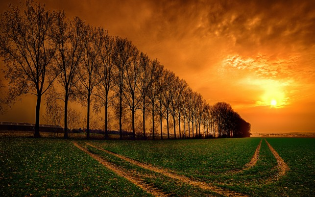 Bare Trees Field Trails Sunset wallpapers and stock photos