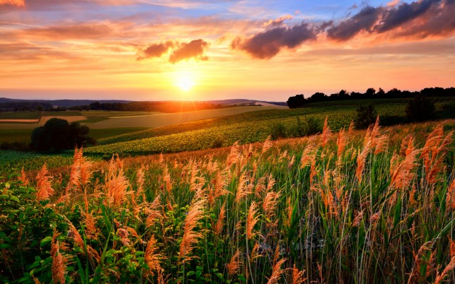 Trees Fields Plants Bright Sun wallpapers and stock photos