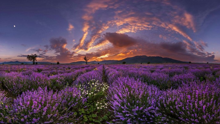 Purple Lavender Clouds Sunset wallpapers and stock photos