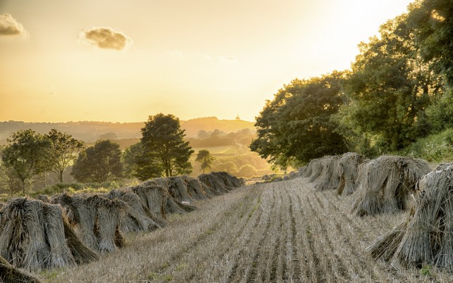 Field Hay Stack Trees Sunny wallpapers and stock photos