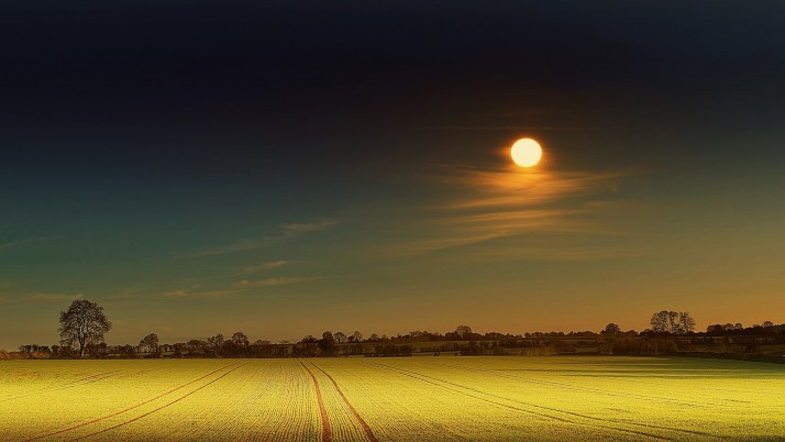 Yellow Field & Full Moon wallpapers and stock photos