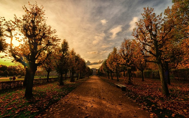 Autumn Avenue Dirty Road Dusk wallpapers and stock photos