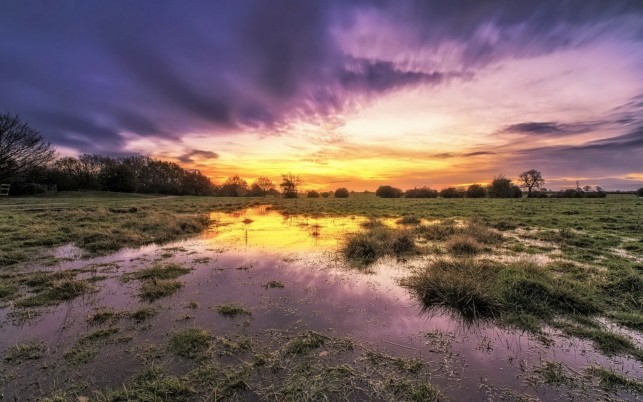 Charming Swamp Gras Purple Sky wallpapers and stock photos