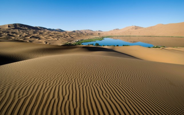Desert Lines Oasis Vegetation wallpapers and stock photos