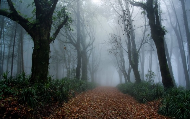 Foggy Forest Way Foliage Grass wallpapers and stock photos