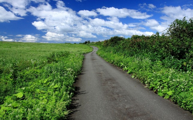 Green Pasture Road Lush Plants wallpapers and stock photos