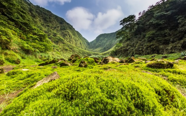 Green Hill Rock Vibrant Plants wallpapers and stock photos