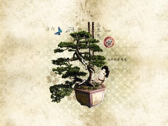 Beautiful Bonsai wallpapers and stock photos