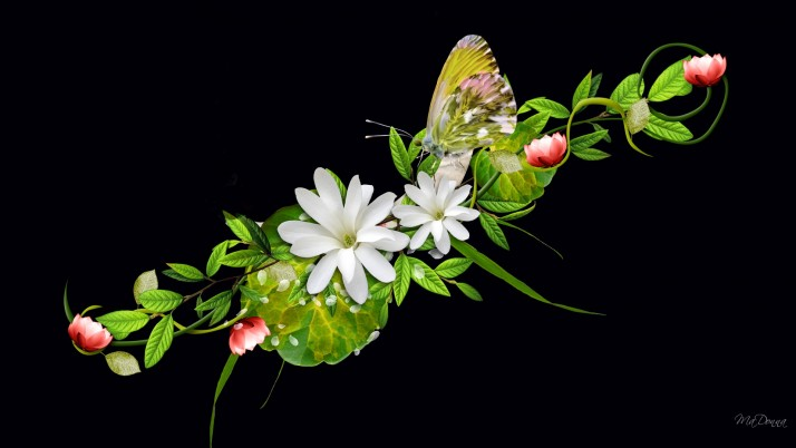 Butterfly & White Flowers wallpapers and stock photos