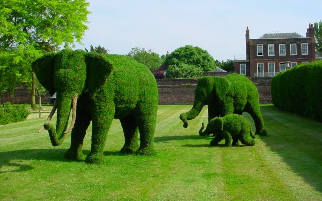 Topiary Elephants wallpapers and stock photos