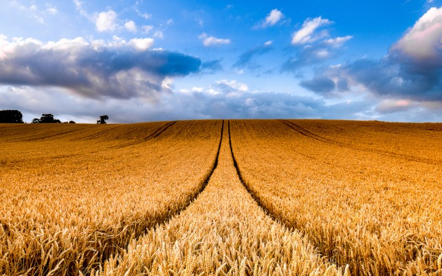 Hilly Wheat Field Trails Sky wallpapers and stock photos