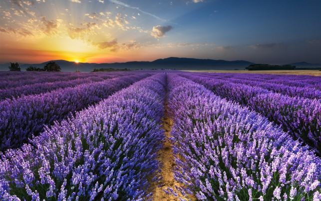 Previous: Splendid Lavender Sunrise