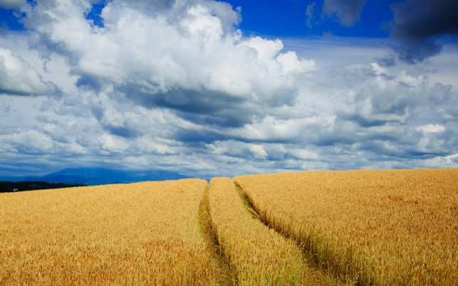 Wheat Field & Nice Clouds wallpapers and stock photos