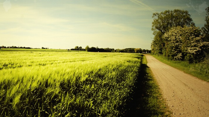 Bright Wheat Field Road Trees wallpapers and stock photos