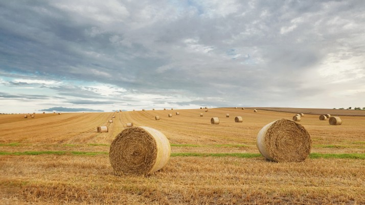 Harvest Field & Hay Bales wallpapers and stock photos