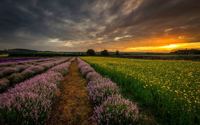 Previous: Nice Lavender Sunset Hampshire