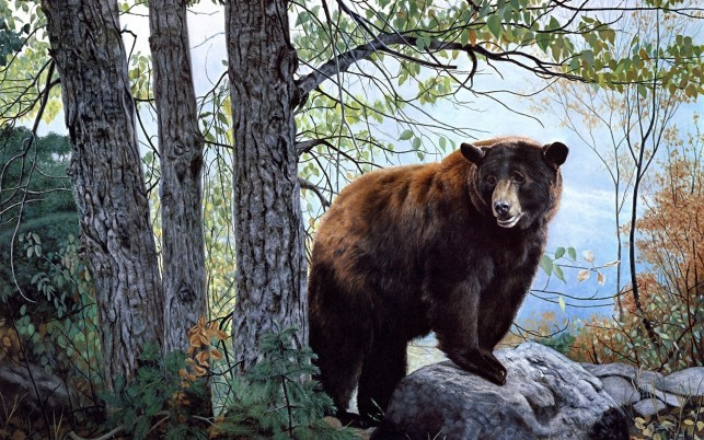 Forest Cute Brown Bear Rock wallpapers and stock photos
