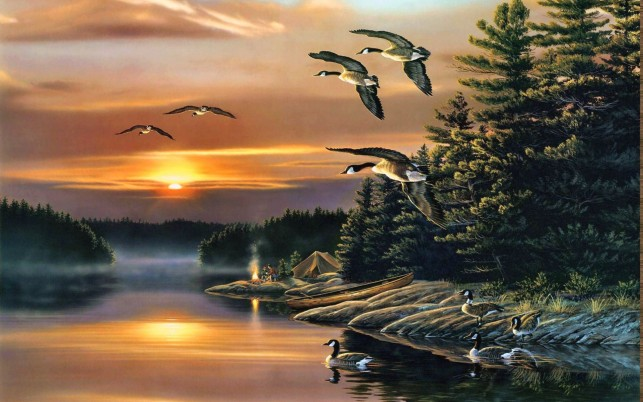Wood Camping Lake Ducks Sunset wallpapers and stock photos