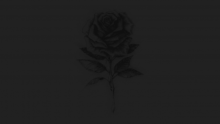 Rose wallpapers and stock photos