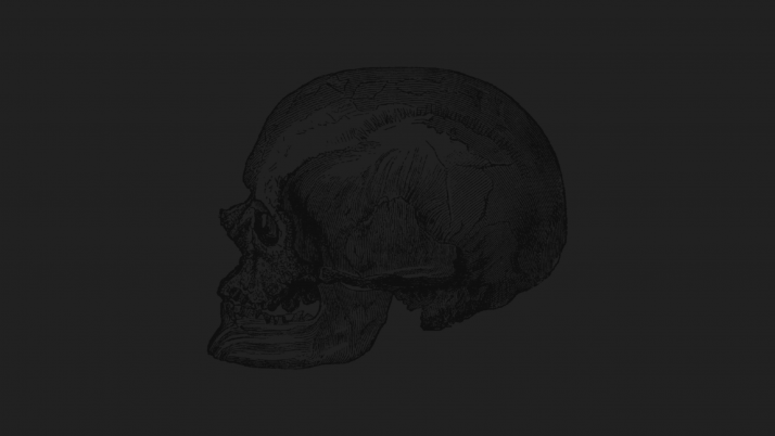 Skull Head wallpapers and stock photos