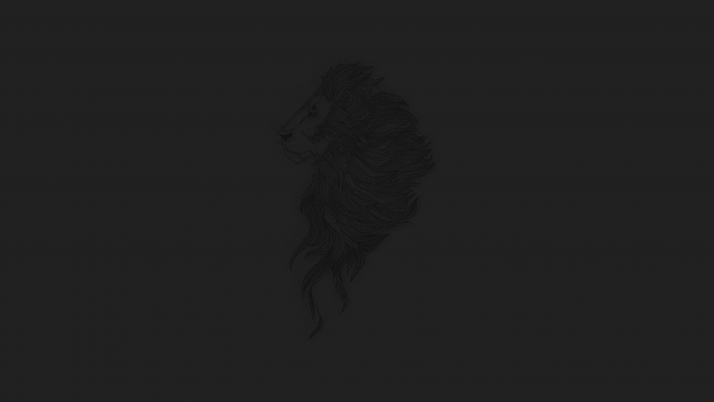 Lion wallpapers and stock photos