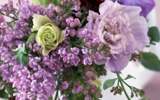 Lilac Blossom wallpapers and stock photos