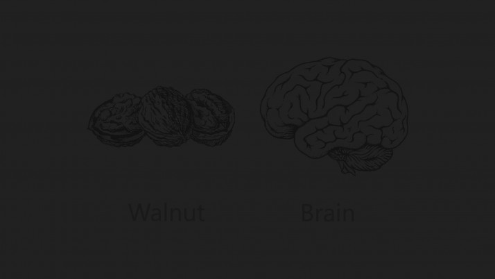 Walnut Brain wallpapers and stock photos