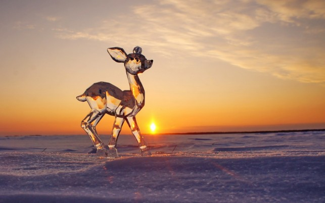 Ice Deer wallpapers and stock photos