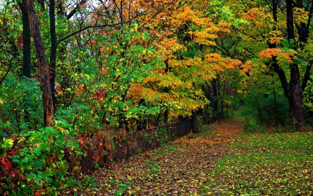 Random: Colorful Woods Path Fence