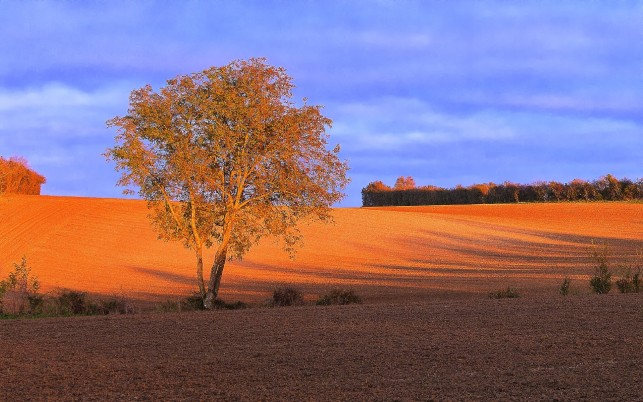 Brown & Orange Arable Trees wallpapers and stock photos