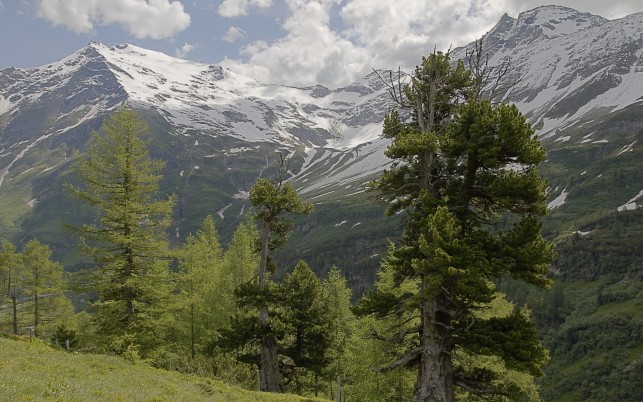 Charming Pine Trees & Peaks wallpapers and stock photos