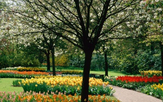 Tulips Park wallpapers and stock photos