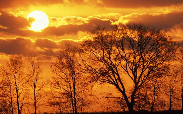 Black Trees Orange Sky Dawn wallpapers and stock photos